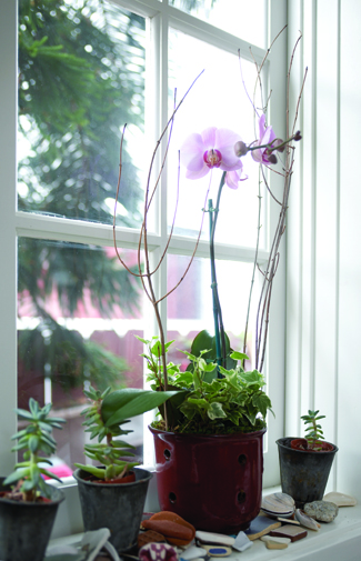 Orchids at window