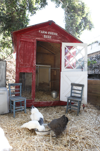 Urban Farmhouse Chicken Coop