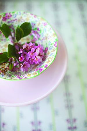 chintz-pink-flower_2