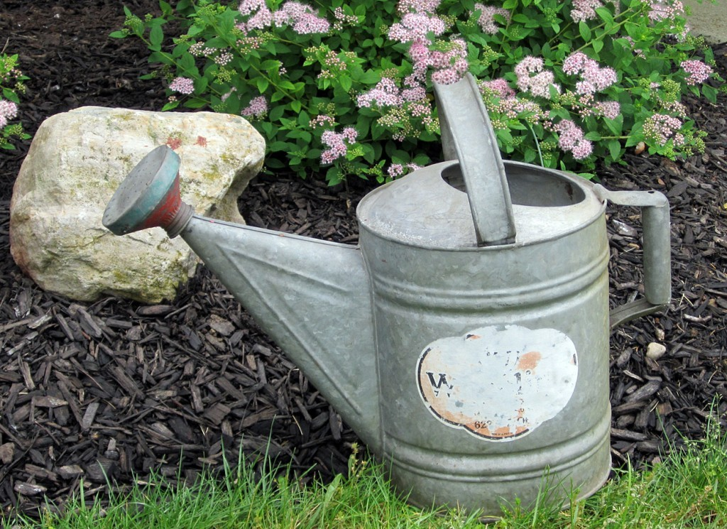An old galvantized watering can in the garden