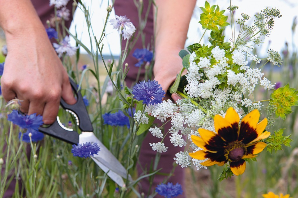 Learn how to grow your own bouquets with a cutting garden.