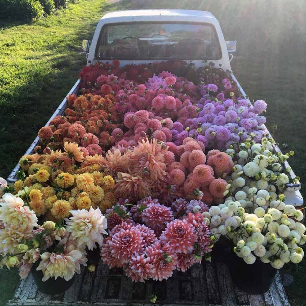 truck bed filled with rainbow of flowers
