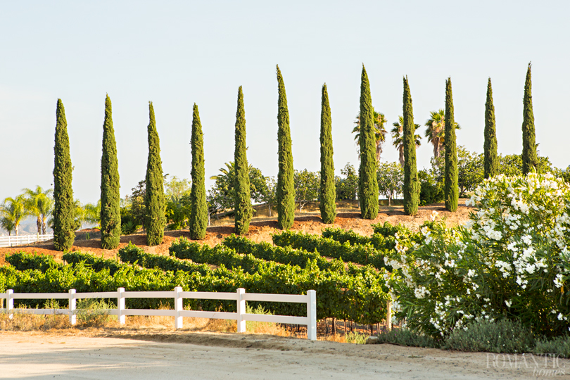 Row after row of orderly grape vines line the rolling hills of the Temecula Valley Wine Country.