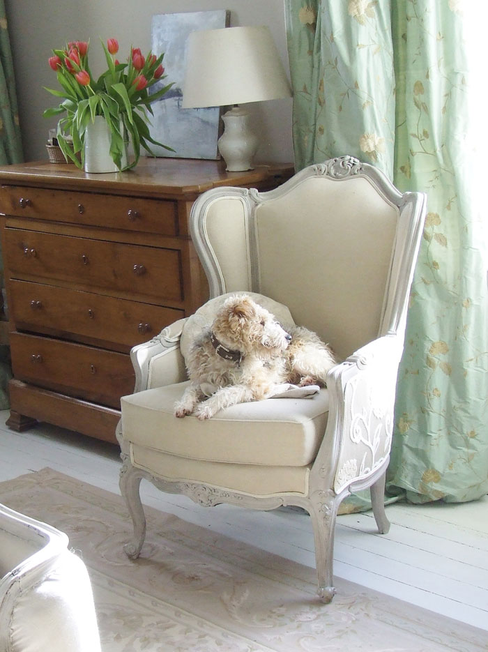 Sharon Santoni's dog in an armchair