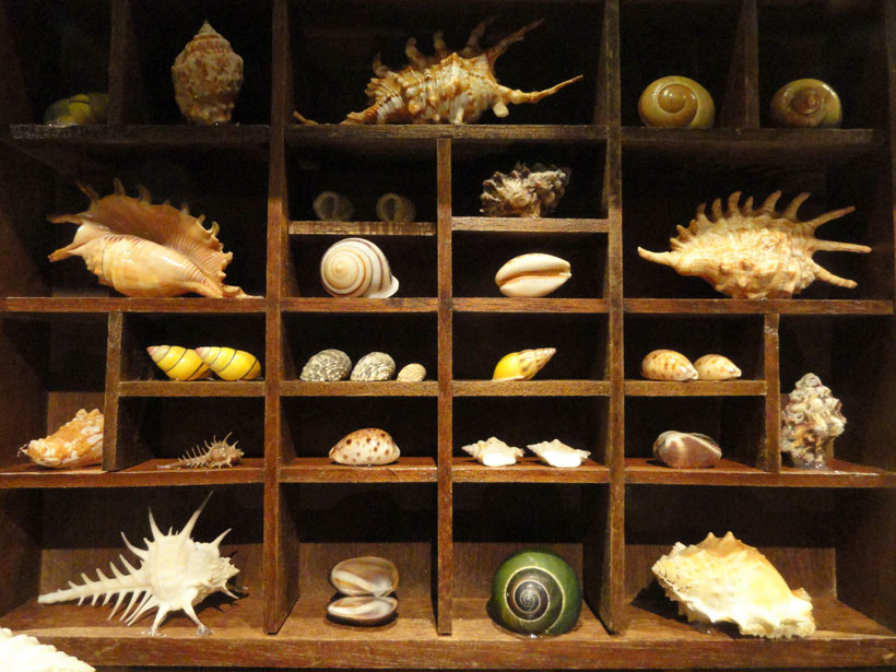 Weathered shelves can boast large seashells, starfish, and dried coral fans. Create a sense of wonder by including a myriad of objects from the tide brimming with a spectrum of colors.