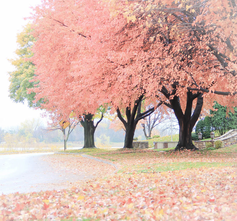 In my hometown of Minneapolis, various maple trees take on a pink cast against gray skies. Skeletal constructions of tangled bittersweet vines brace themselves for the harsh edges of winter. - Anita Rivera #romantichomes