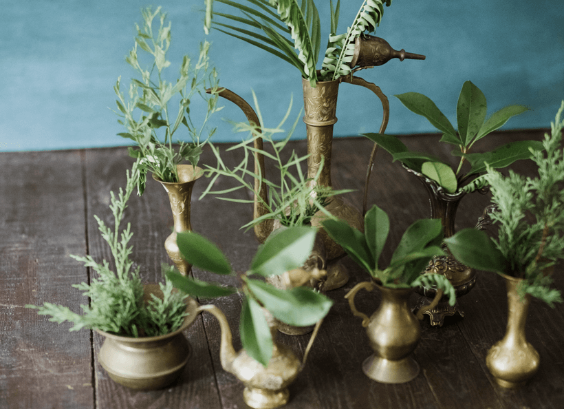A collection of vintage brass vessels displaying fresh green leaves.