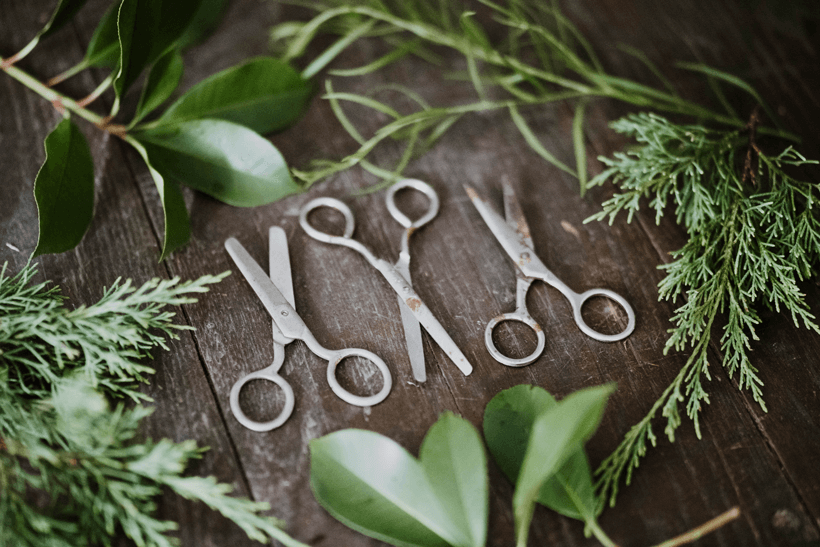 Three pairs of vintage scissors surrounded by leaves