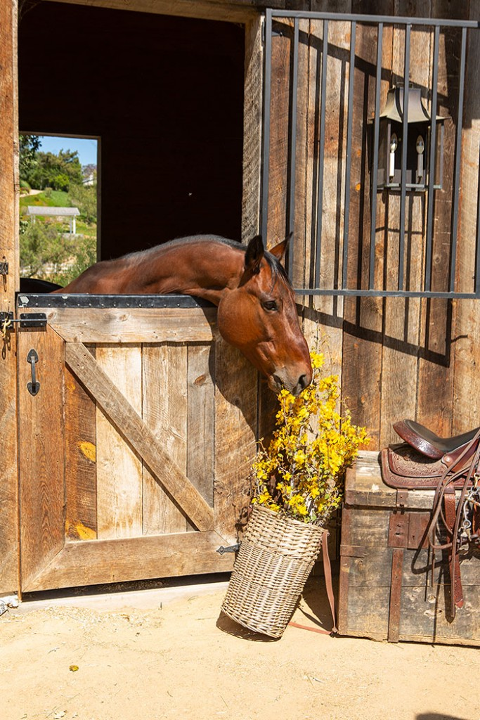 A horse eating a floral arrangement
